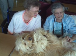 Toffy spazzolato pet therapy