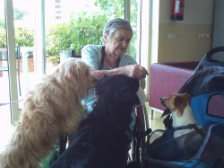 pet therapy biscotto